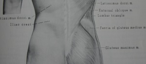 Using a belt to often can limit the development of core muscle especially the lumbar spine